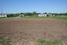 strawberries,farm,farming strawberries,tilled field,